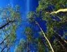 Марий Эл бьет рекорды по лесным пожарам